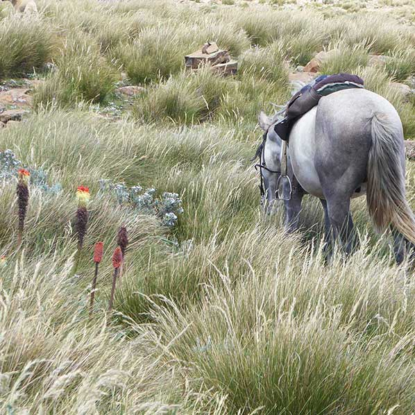 Horse Foraging